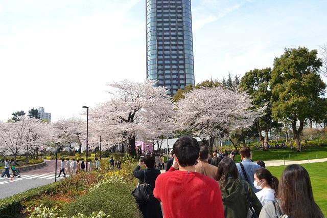 桜に向かう